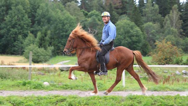 Sweden Icelandic Horse Horse Riding Holiday Horsexplore