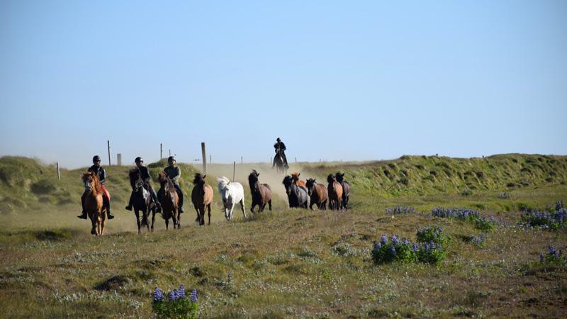 Hekla Trail Ride