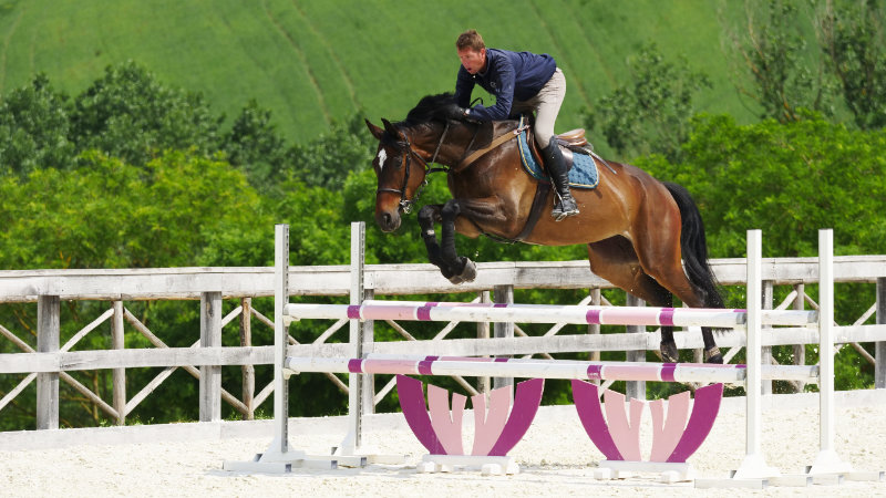 Italy, Marche - Top class show jumping training