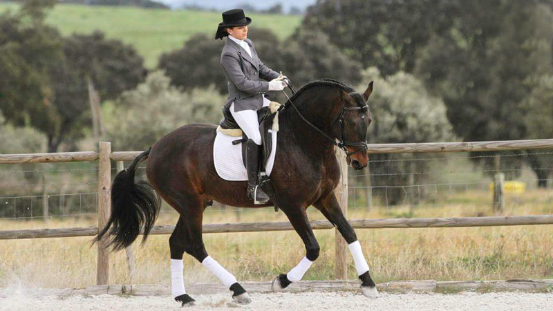 Portugal, Avis - Dressage & Working Equitation
