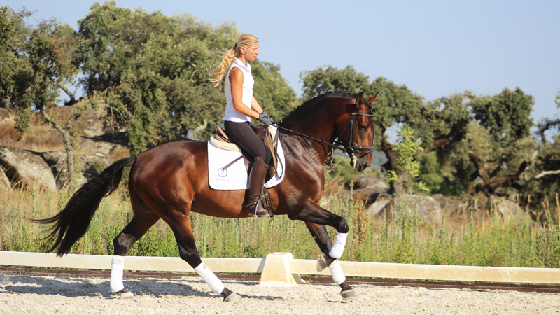 Portugal - Dressage in Alentejo