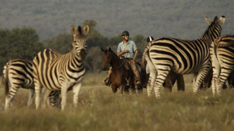 South Africa, Waterberg - Ranch Stay with Safari