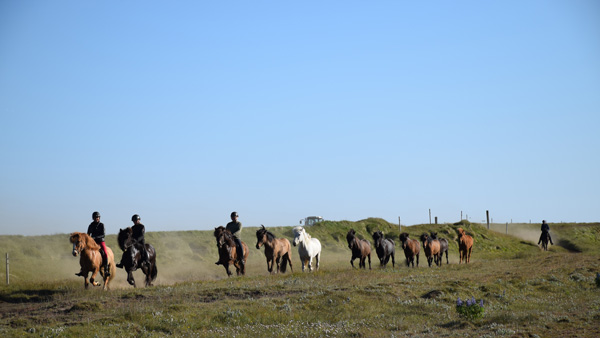 Hekla Trail Ride