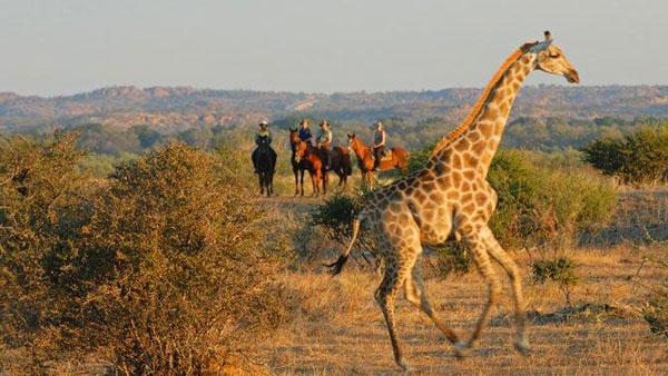 Africa Explorer