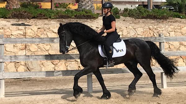 Program Dressage & Beach ride on Friesian horses