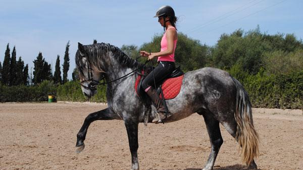 Spain, Mallorca - Dressage on Andaluc�an Horses